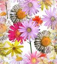Daisies Seamless Tile Royalty Free Stock Photo