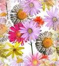 Daisies Seamless Tile Royalty Free Stock Photo