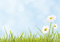 Daisies on spring meadow Stock Images