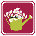 Daisies in Watering Can Royalty Free Stock Photo