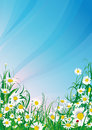 Daisy background illustration of in the grass with blue sky Royalty Free Stock Photography