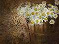 Daisy Basket Royalty Free Stock Photo