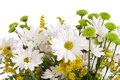 Daisy bunch bouquet isolated on white Royalty Free Stock Image