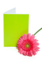 Daisy and card green thank you blank greeting with pink gerber isolated on white Stock Image