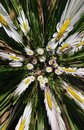 Daisy Chain Flowers Abstract Background Royalty Free Stock Photo