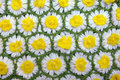 Daisy Chains Royalty Free Stock Images