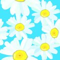 Daisy chamomile field meadow spring summer flowers seamless pattern on light blue sky background. Vector Royalty Free Stock Photo