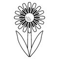 Daisy floral garden spring thin line