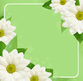 Daisy flowers background corners with frame on green Royalty Free Stock Photo