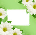 Daisy flowers background corners with frame on green Stock Photo