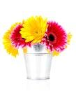 Daisy flowers in the bucket