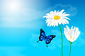 Daisy flowers and butterfly against blue sky
