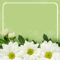 Daisy flowers edge and frame on green background Royalty Free Stock Image