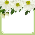 Daisy flowers edge and frame on green background Royalty Free Stock Images
