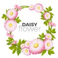 Daisy flowers frame with pink blossoms and green leaves vector Royalty Free Stock Photo