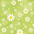 Daisy flowers on a green background seamless pattern Royalty Free Stock Images