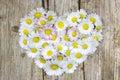 Daisy flowers in heart shape Royalty Free Stock Photo