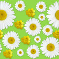 Daisy flowers pattern Royalty Free Stock Photo