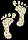 Daisy footprints Royalty Free Stock Images