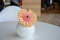 Daisy-gerbera in vase Royalty Free Stock Photo