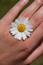 Daisy on hand small looking like a ring Royalty Free Stock Images