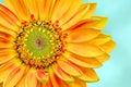 Daisy Macro Royalty Free Stock Images