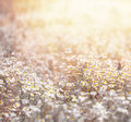 Daisy meadow closeup of beautiful fresh in warm yellow sun light abstract floral background soft focus many white little Royalty Free Stock Photo