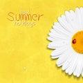 Daisy summer flower. Chamomile. Best Summer holidays
