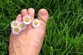 Daisy toes Image libre de droits