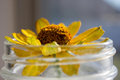 Daisy in water Royalty Free Stock Photo