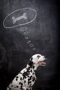 Dalmatian dog dreaming about a bone on black in thought bubble Royalty Free Stock Photo