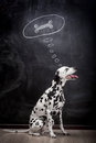 Dalmatian dog dreaming about a bone on black in thought bubble Royalty Free Stock Photos
