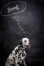 Dalmatian dog dreaming about a bone on black in thought bubble Stock Image