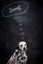 Dalmatian dog dreaming about a bone on black in thought bubble Royalty Free Stock Photography