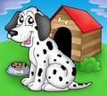 Dalmatian dog in front of kennel Royalty Free Stock Photo