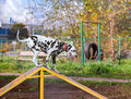 Dalmatian dog is trained on the playground