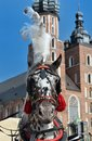 Dalmatian horse in cariage one Royalty Free Stock Images