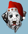 Dalmatian Santa Royalty Free Stock Photo