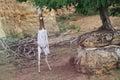 Dama gazelle Royalty Free Stock Photo