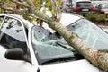 Damaged car tree fallen on Royalty Free Stock Photos