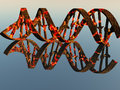 Damaged dna strands strand on reflective surface Royalty Free Stock Images