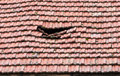 Damaged roof old slope from tiles Stock Images