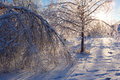 Damaged trees after an extreme ice storm coated from icestorm Royalty Free Stock Photo