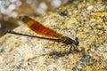 Damsel flies at water fall Royalty Free Stock Photos