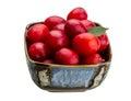 Damson plum isolated on white background Royalty Free Stock Image