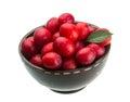 Damson plum isolated on white background Stock Photo