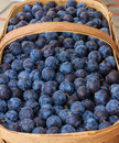 Damson plums at a produce stand Royalty Free Stock Photos