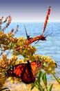 Dancing butterflies Stock Photos