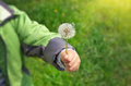 Dandelion in child hand Royalty Free Stock Photo
