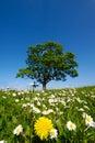 Dandelion and daisy flowers Stock Photos